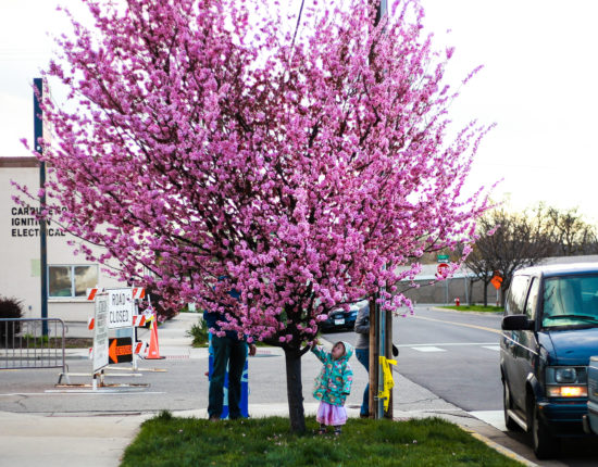 A child in a raincoat stands under a blooming lilac tree on a street corner