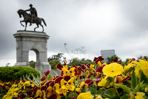 Yellow and red flowers in front of a statue of Sam Houston.