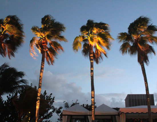 Palm trees illuminated by lights.