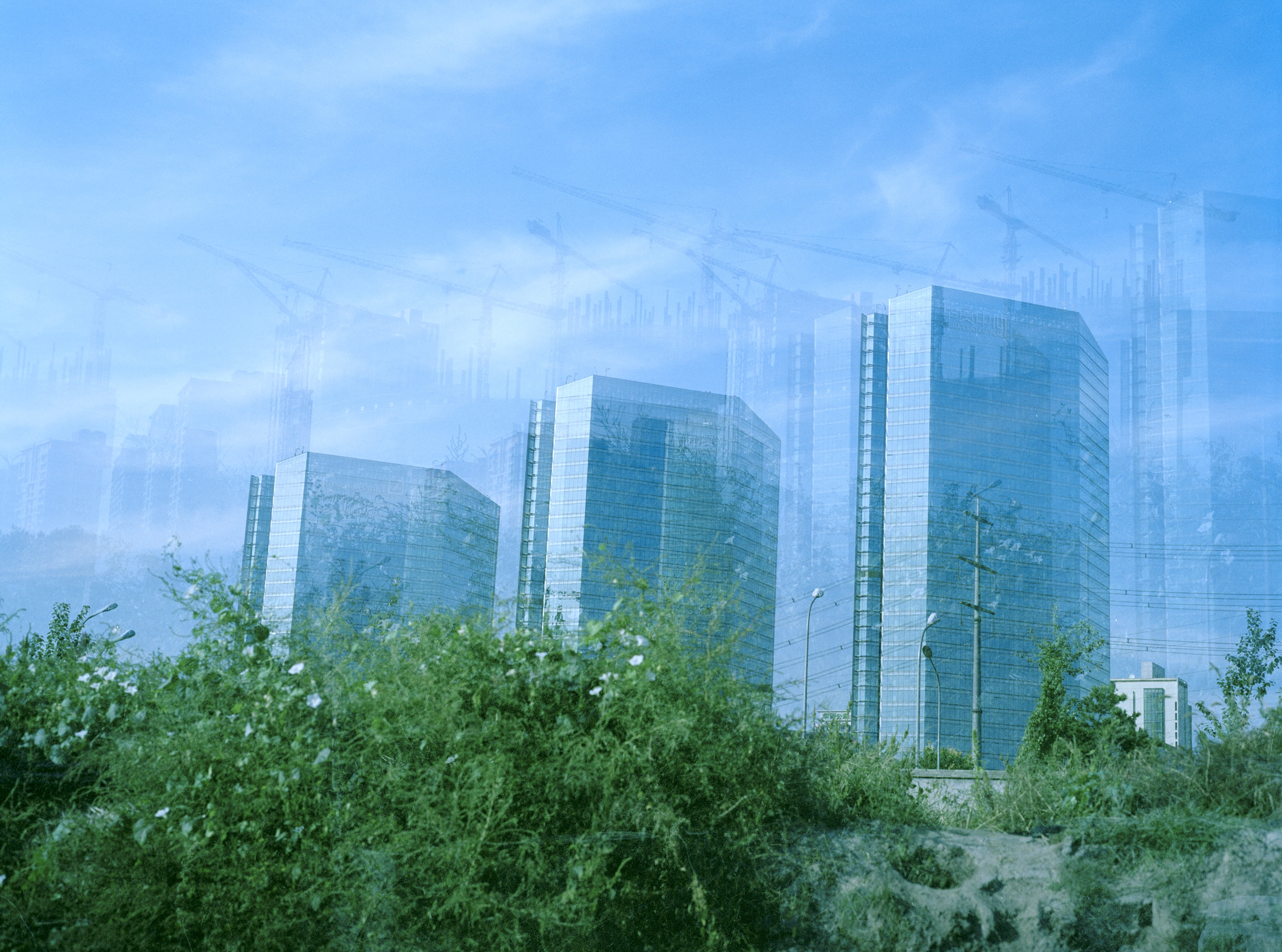 Three identical glass buildings look hazy behind a large bush. Powerlines can be seen very faintly.