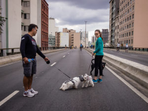 A man and a woman in the middle of the street watching their two small dogs pull at their leashes in order to get close to each other while a larger dog watches in from a distance.