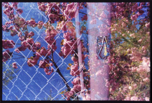Triangle wire fence with faded white pole that has a small section of graffiti. Cherry blossom tree is faded in the background.